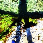 shadow blues