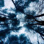 A sky and many trees